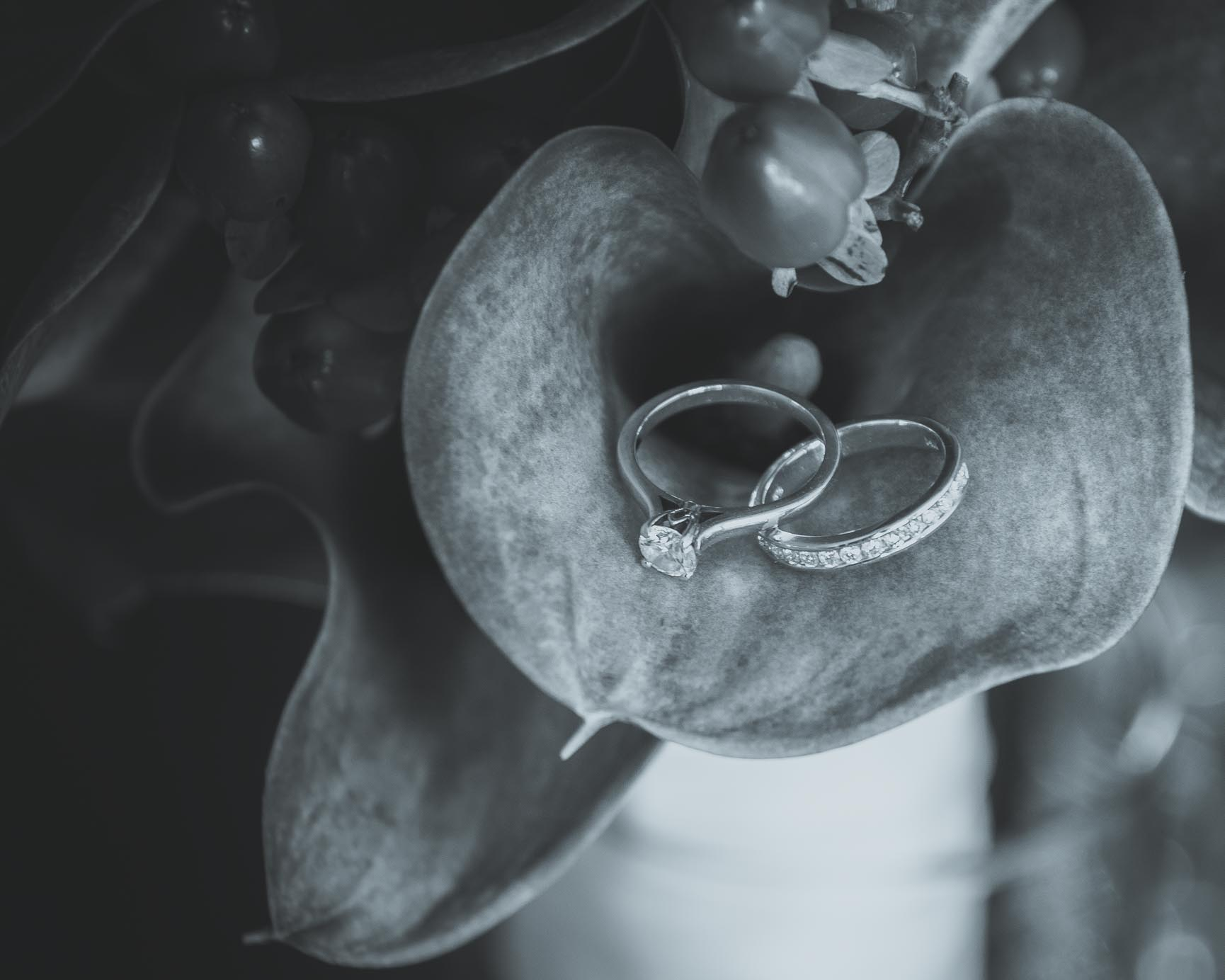 Wedding Rings in lily